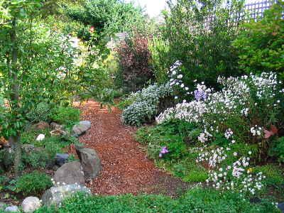 My Mom's garden