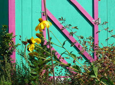 yellow flowers against shed