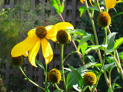 yellow flowers closeup